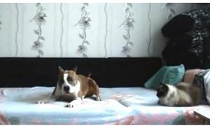 Thú vị video 'Ở nhà một mình' phiên bản chó mèo