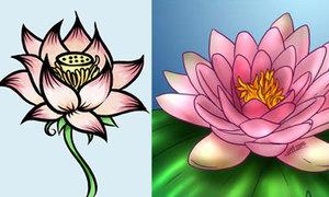 Khéo tay vẽ hoa sen bung nở với 5 cách