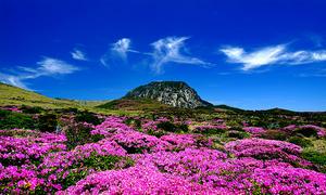 Lạc bước ở hòn đảo thiên đường của xứ kim chi