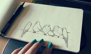 Một số kiểu vẽ chú chim đáng iu với mọi hình dáng