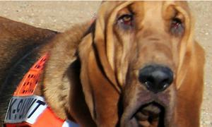 Chú chó được bầu làm thị trưởng ở Mỹ