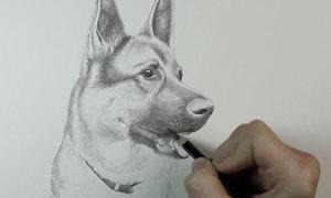 Trổ tài vẽ cún con siêu đáng iu nào (2)