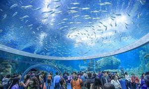 Ngỡ ngàng vẻ đẹp kỳ vĩ của công viên hải dương lớn nhất thế giới