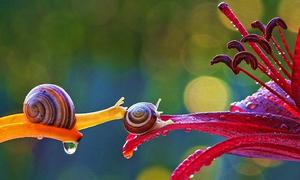 Zoom vào cuộc sống long lanh đáng ganh tỵ của ốc sên
