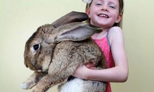 Thích thú ẵm chú thỏ 'khủng' nhất hành tinh, nặng 22kg