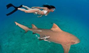 Thiếu nữ mặc bikini vô tư bơi đùa cùng bầy cá mập