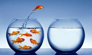 Giải mã giấc mơ: Mơ thấy con cá