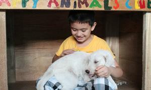 Bé 9 tuổi xinh trai xây nhà cho những chú chó lạc