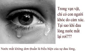 Tại sao khi đau lòng nước mắt lại rơi?