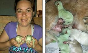 Chó sơ sinh màu xanh tự nhiên đầu tiên trên thế giới