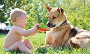 Tình bạn ngọt ngào của cậu bé 2 tuổi và chú chó cưng