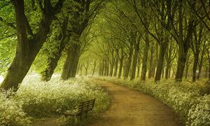 20 con đường mòn đẹp như cổ tích giữa đời thực