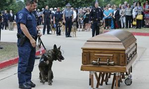 Hơn 1.000 người đau buồn tiễn đưa chú chó anh hùng