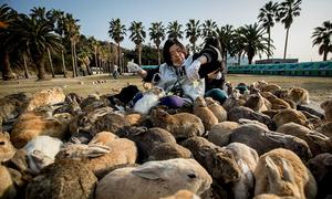Đảo thỏ, đảo mèo 'hút hồn' hàng triệu du khách