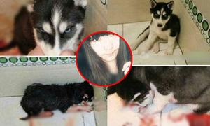 Dân mạng rùng mình với cô gái giết cún dã man