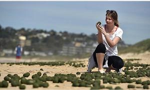 Hàng nghìn quả 'trứng ngoài hành tinh' dạt vào bờ biển