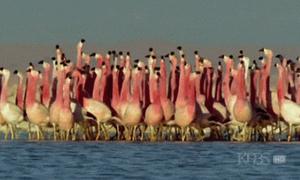 Bật mí 10 điều thú vị bạn chưa biết về loài chim