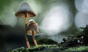 Thế giới tươi đẹp kỳ diệu của những loài nấm