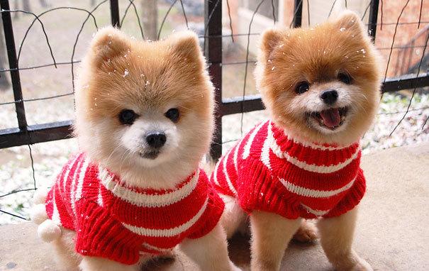 Những cặp thú cưng song sinh nhìn là yêu