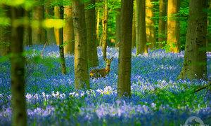 Lạc bước trong những khu rừng huyền ảo như cổ tích