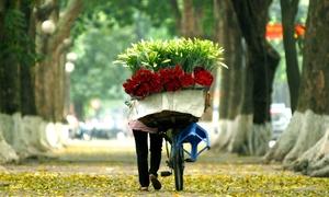 Đẹp ngỡ ngàng con đường lãng mạn bậc nhất Hà Nội