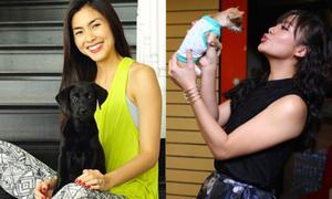 Cuộc sống 'sang chảnh' của thú cưng xì ta Việt