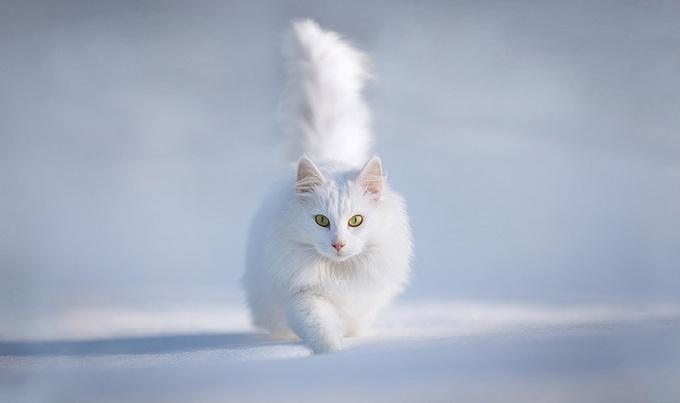 Thế giới động vật đẹp diệu kỳ giữa trời đông tuyết trắng
