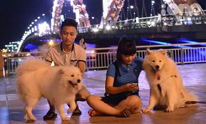 Teen Đà Nẵng dắt cún cưng bạc triệu dạo phố