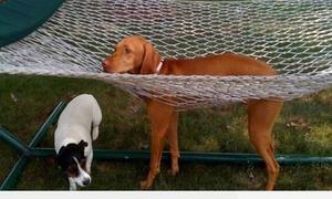 Hài hước các pha mắc kẹt của cún