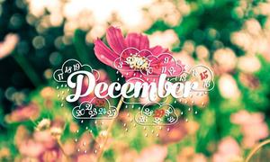 Tháng 12 dành riêng cho nó