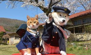 Đôi bạn chó mèo ngộ nghĩnh dắt nhau du lịch Nhật Bản