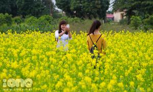 Giới trẻ Hà Thành mê mẩn đồng hoa cải vàng siêu lãng mạn