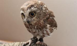 Vẻ đẹp huyền bí của loài chim 'phù thủy'