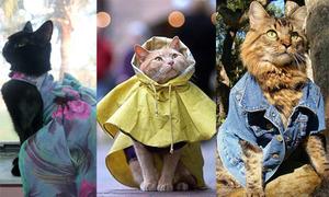 Thời trang mèo sành điệu chẳng kém ai