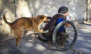 Chú chó đẩy xe lăn cho chủ bị liệt hai chân