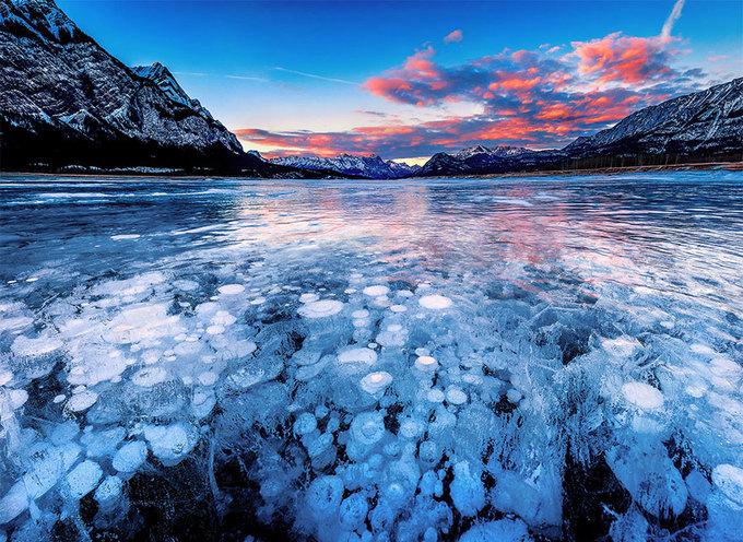 """<p class=""""Normal""""> Những bong bóng khí bị đông cứng dưới hồ Abraham ở Alberta (Canada) trông như một tác phẩm nghệ thuật độc đáo.</p>"""