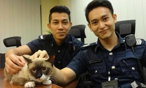 Anh cảnh sát cứu mèo được dân mạng Singapore 'truy lùng'