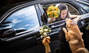 Những bức ảnh cưới đẹp - độc khiến trái tim FA rung rinh
