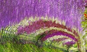16 con đường rợp bóng cây, rực sắc hoa đẹp đến mê mẩn