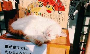 Đền Mèo - Điểm đến không thể bỏ qua cho hội cuồng mèo