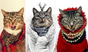 Những tiểu thư mèo đẳng cấp sang trọng
