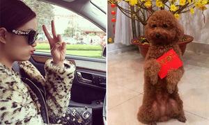 Sao Việt 20/2: Hoàng Thùy Linh diện cây hàng hiệu, Sĩ Thanh lì xì cho cún cưng