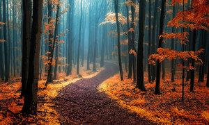 22 khu rừng đẹp ma mị tưởng chỉ có trong phim cổ tích