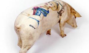 1,4 tỷ đồng một con lợn xăm mình ở Trung Quốc