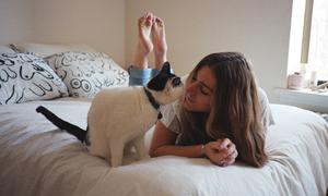 Thế giới của những cô nàng độc thân và mèo cưng