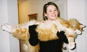 Dễ thương vô cùng loạt mèo cưng khổng lồ