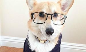 12 chú chó 'bác học' bảnh nhất thế giới
