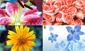 Cách chọn hoa hé lộ mong ước tình yêu của bạn
