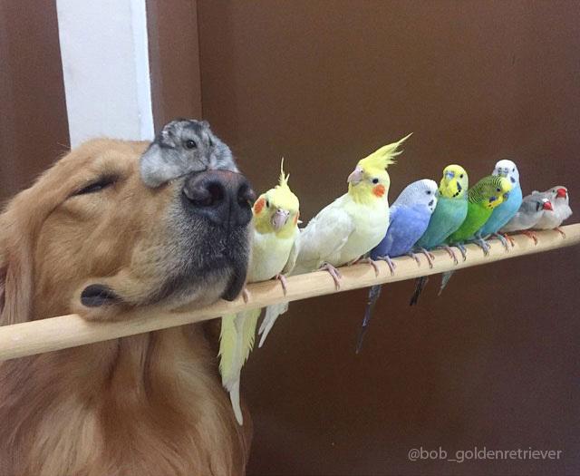 Gia đình cực yêu với 1 chú chó, 8 con chim và 1 chú chuột