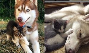 Đôi bạn thân mèo - cún 'lũng đoạn' Instagram vì quá kute